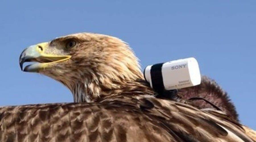 Sony Action Cam Mini surprinde un record mondial spectaculos: zborul de pe Burj Khalifa al unui vultur imperial