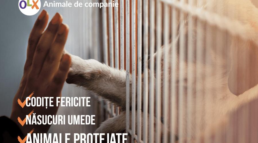 OLX a modificat condițiile și termenii în care utilizatorii pot comercializa legal animale de companie