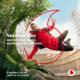 Vodafone lansează primul abonament complet digital. Flex oferă acces la conectivitate 5G