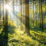 Vodafone anunță prima pădure inteligentă din Romania