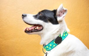 AirTag poate fi folosit și pentru animalele de companie cu ajutorul TagVault: Pet